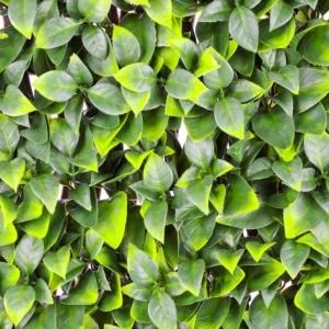 Orange Tree Leaf Trellis