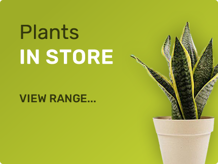 Plants in Store - View our range