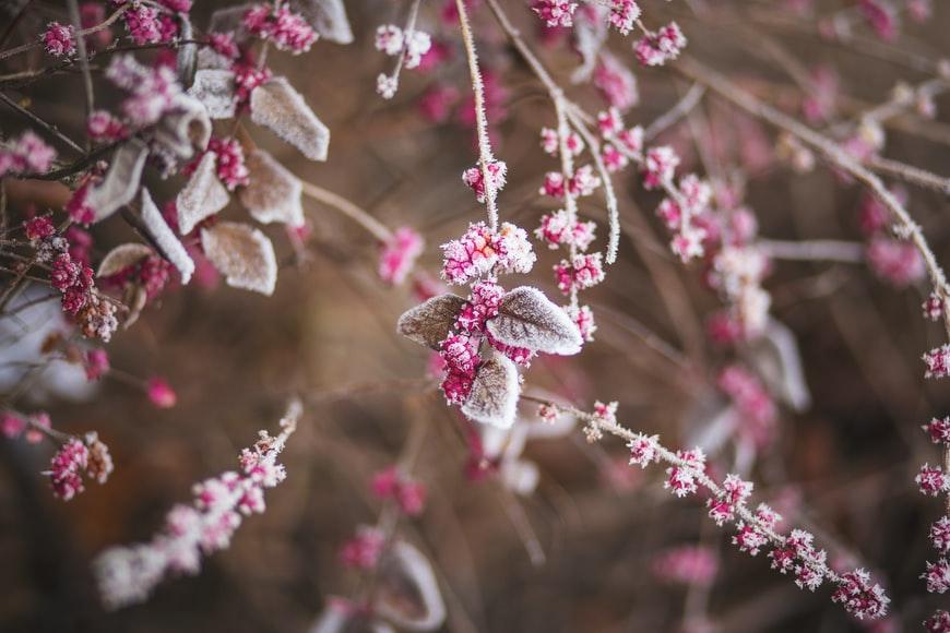 5 steps to build a stunning Winter garden